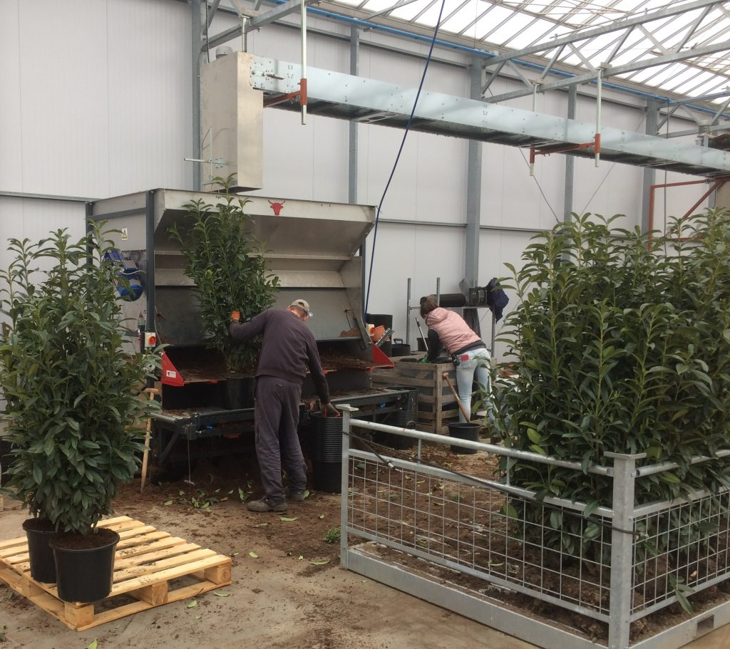 Potting Machine for hedges
