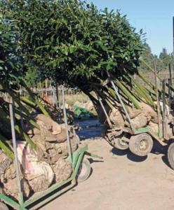 Bomen Transportwagen Kluiten